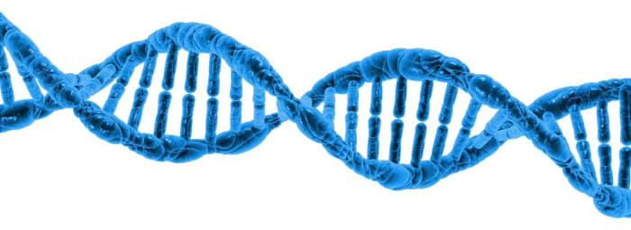 Ein DNA Strang